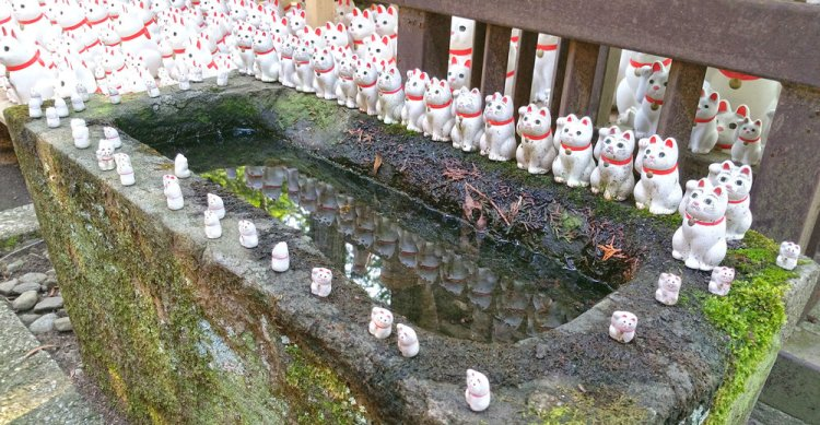 Image result for Gotokuji Temple